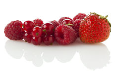 Red Berry Fruits Stock Images