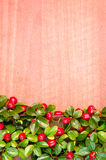 Red berry and green leaves background. Autumn concept with red berry plant Royalty Free Stock Images