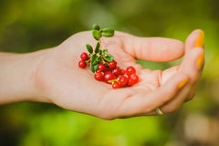 Red berry in the hand Stock Images