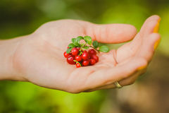 Red berry in the hand Royalty Free Stock Photos