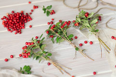 Red berry Stock Image