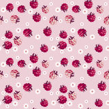 Red berry on pale rosy background Stock Photos