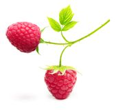 Red berry raspberry isolated Royalty Free Stock Images