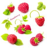 Red berry raspberry isolated Royalty Free Stock Photos