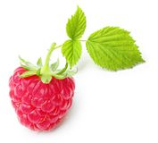 Red berry raspberry isolated Royalty Free Stock Photography