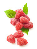 Red berry raspberry Stock Images