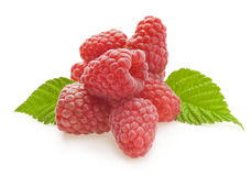 Red berry raspberry Royalty Free Stock Images