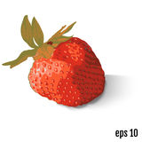 Red berry strawberry on white background. Vector Stock Photos