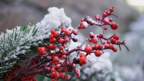Red Berry in Warm White Winter stock image