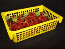 Red berry in the yellow  box Royalty Free Stock Image