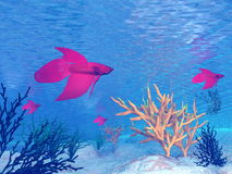 Red betta fishes - 3D render. Several red betta fish under water Stock Photography