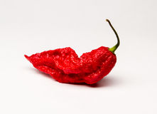 Red Bhut Jolokia Ghost Pepper. This is a red bhut jolokia ghost pepper stock photography