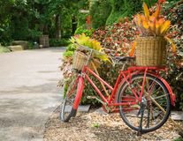 Red bicycle in the darden Stock Photo