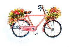 Red bicycle with flowers on white. Retro red bicycle with flowers in basket on white background, watercolor illustrator , hand painted vector illustration