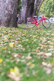 Red bicycle in garden Stock Photo