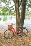 Red bicycle leaned on a tree Stock Photography