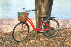 Red bicycle leaned on a tree Royalty Free Stock Photos