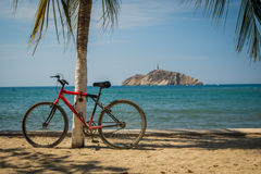 Red bicycle leaning on palm tree in the beach Royalty Free Stock Photos