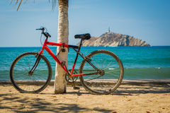 Red bicycle leaning on palm tree in the beach Royalty Free Stock Photography