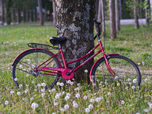 Red bicycle royalty free stock photography