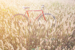 Red bicycle in morning light Royalty Free Stock Photos