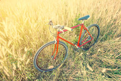 Red bicycle in morning light Stock Photography