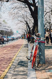 Red bicycle and sakura Royalty Free Stock Photography