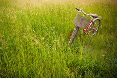 A red bicycle Royalty Free Stock Images