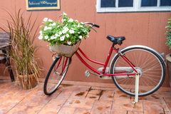 Red bicycle with white flower Royalty Free Stock Images