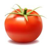 Red big fresh tomato  Stock Photos