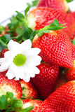 Red big juicy ripe strawberries and flower Stock Photo