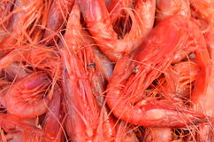 Red big king shrimps prawns in fish market selling in turkey antalya Stock Image