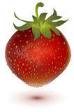 Red big ripe juicy realistic strawberry Royalty Free Stock Images