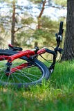 Red Bike Close-up Lying on Green Grass Stock Image
