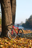 Red bike standing near a trunk large tree Royalty Free Stock Photography