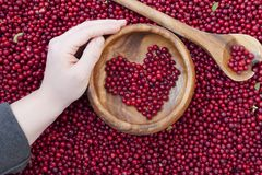 Red bilberry berries Royalty Free Stock Photos