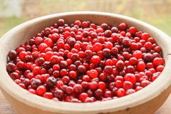 Red berries close-up. Red bilberry fruits close-up in a wooden big bowl stock photos