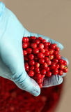 Red bilberry in hand Stock Photography