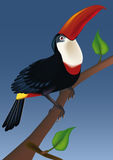 Red billed bird toucan Stock Images