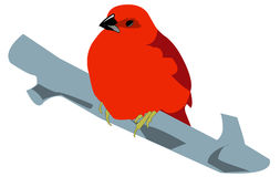 Red bird Royalty Free Stock Photography