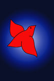 Red bird. Red bird flying with blue background Stock Image