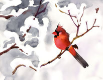 Red bird. On a branch with snow Royalty Free Stock Photography