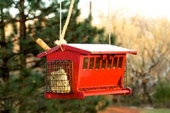Red bird feeder Royalty Free Stock Images