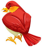Red bird Royalty Free Stock Image