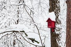 Red bird house in winter forest. Of Timiryazevskiy park in Moscow city royalty free stock photography