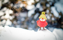Red bird. On ice while it snows Royalty Free Stock Photo
