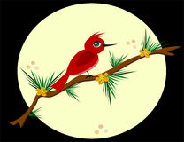 Red Bird on a Pine Branch Royalty Free Stock Photos