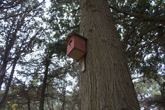 Red bird`s house. Hanging on the tree royalty free stock photography