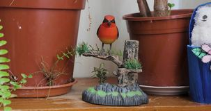 Red bird toy on a tree branch.  stock video footage