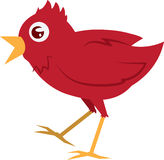 Red Bird Walking Royalty Free Stock Images